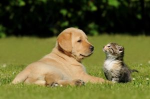 Kitten and Puppy Care